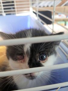 kleine dreifarbige Katze in einem Käfig