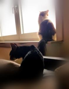ein getiegerter kleiner Kater auf einem Sofa und ein schwarz-weißer Kater auf der Fensterbank