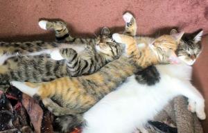 drei Katzen liegen dicht nebeneinander auf einer Decke