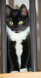 schwarz-weiße Katze sitzt auf einem Kratzbaum