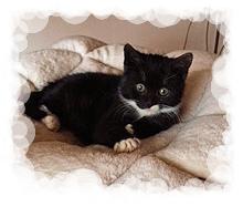 schwarz-wei0es Katzenkind auf einem beigen Kissen liegend
