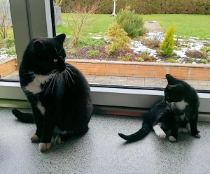 schwarz-weißer Kater und kleine schwarz-weiße Katze vor einem Fenster, schauen sich an
