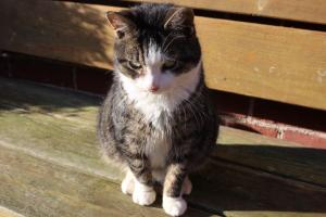 grau getiegerte katze sitzt auf einer Holzbank