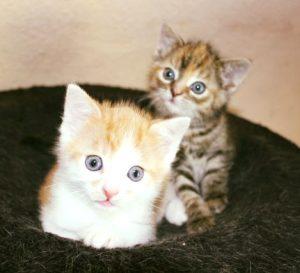 zwei Kitten in einem Nest sitzend, schauen in die Kamera