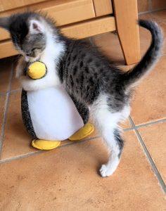 kleine weiß-grau-getiegerte Katze umarmt eine Türstopper-Pinguin