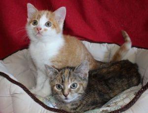 zwei Kitten auf einem Kissen