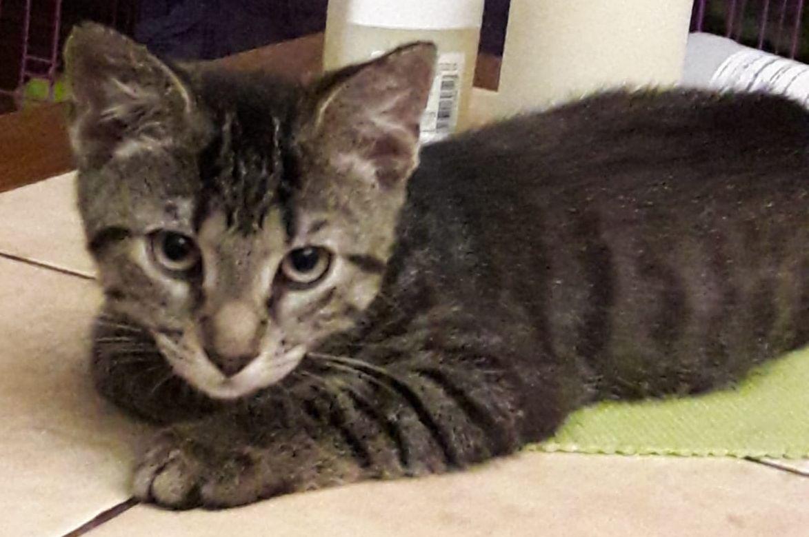 kleine getiegerte Katze auf einer Decke liegend, schaut in die Kamera