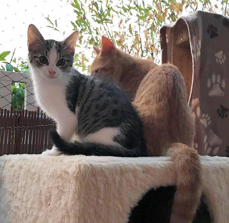 roter Kater und kleine weiß-graue Katze sitzen nebeneinander auf dem Balkon