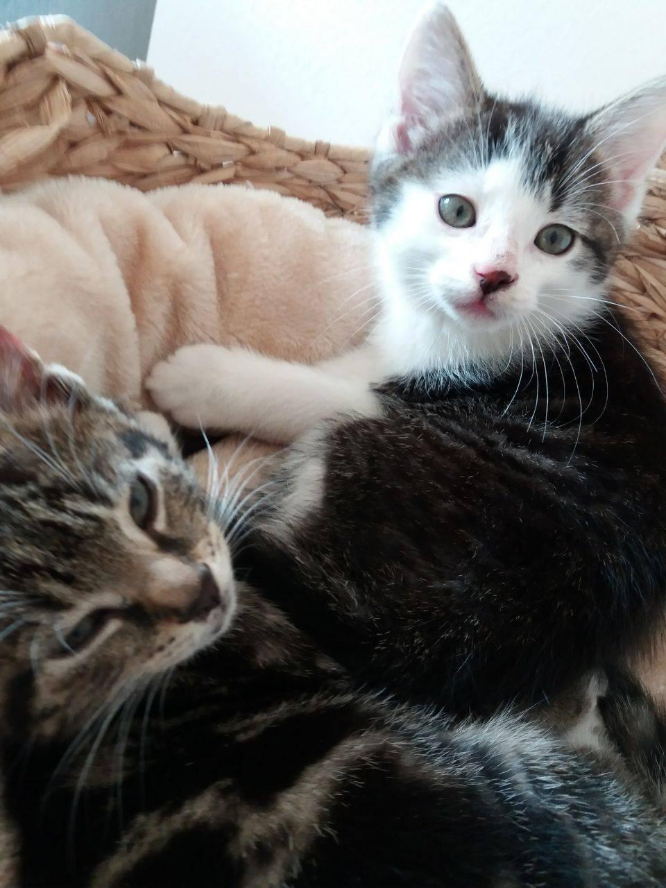 zwei Katzenkinder in einem Korb, schauen in die Kamera