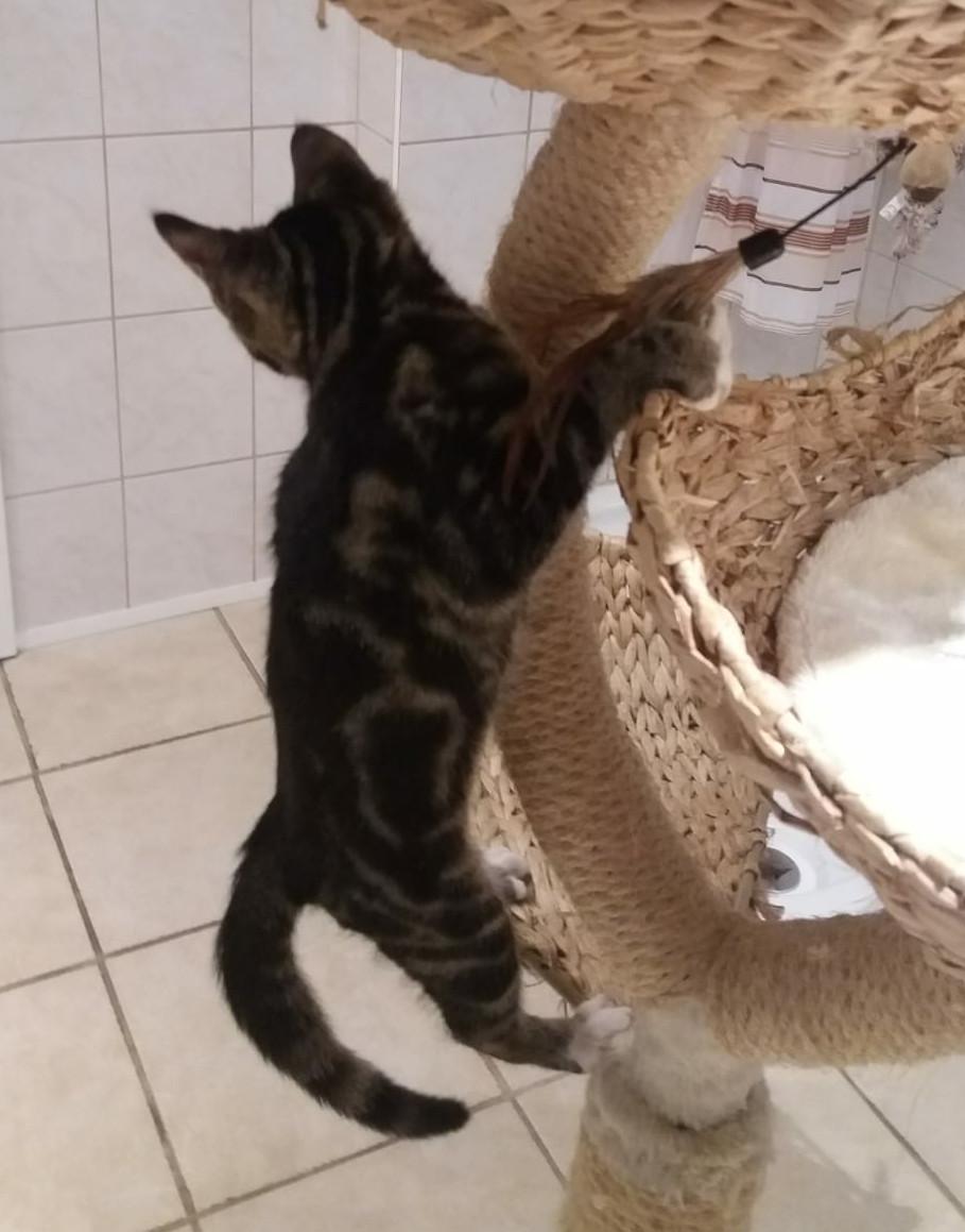 Kitten an einem Kratzbaum