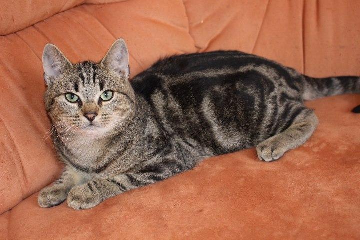 kleiner Tabby-Kater auf einem Sofa liegend