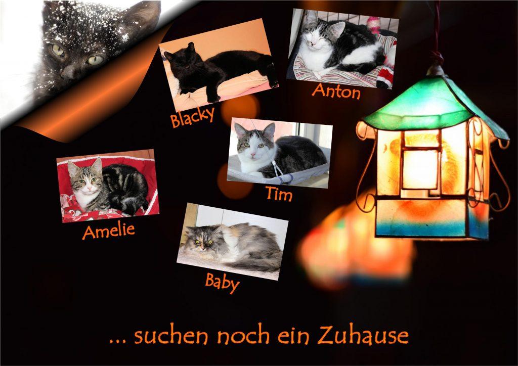 fünf Katzenfotos auf einem dunklen Hintergrund mit Papierlaterne in Hausform