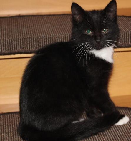 kleiner schwarz-weißer Kater sitzt auf einer Treppenstufe