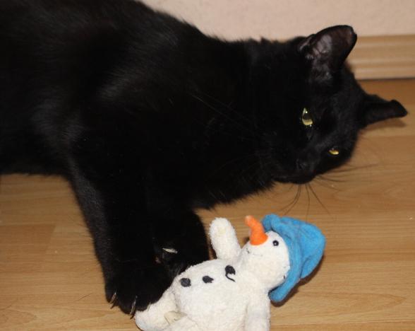 schwarzer Kater, auf der Seite liegend, mit einem Spielzeug