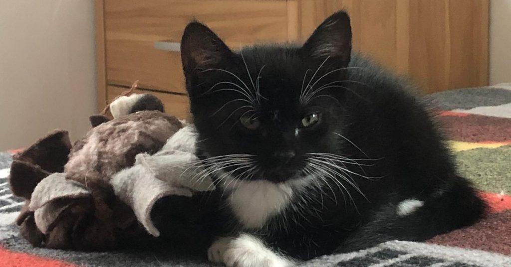 kleine schwarz-weiße Katze liegt auf einer bunten Decke