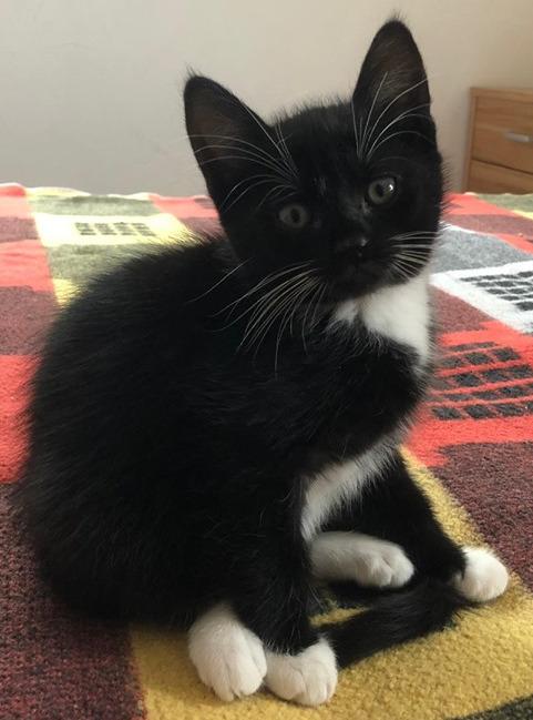 kleine schwarz-weiße Katze sitzt auf einer bunten Decke