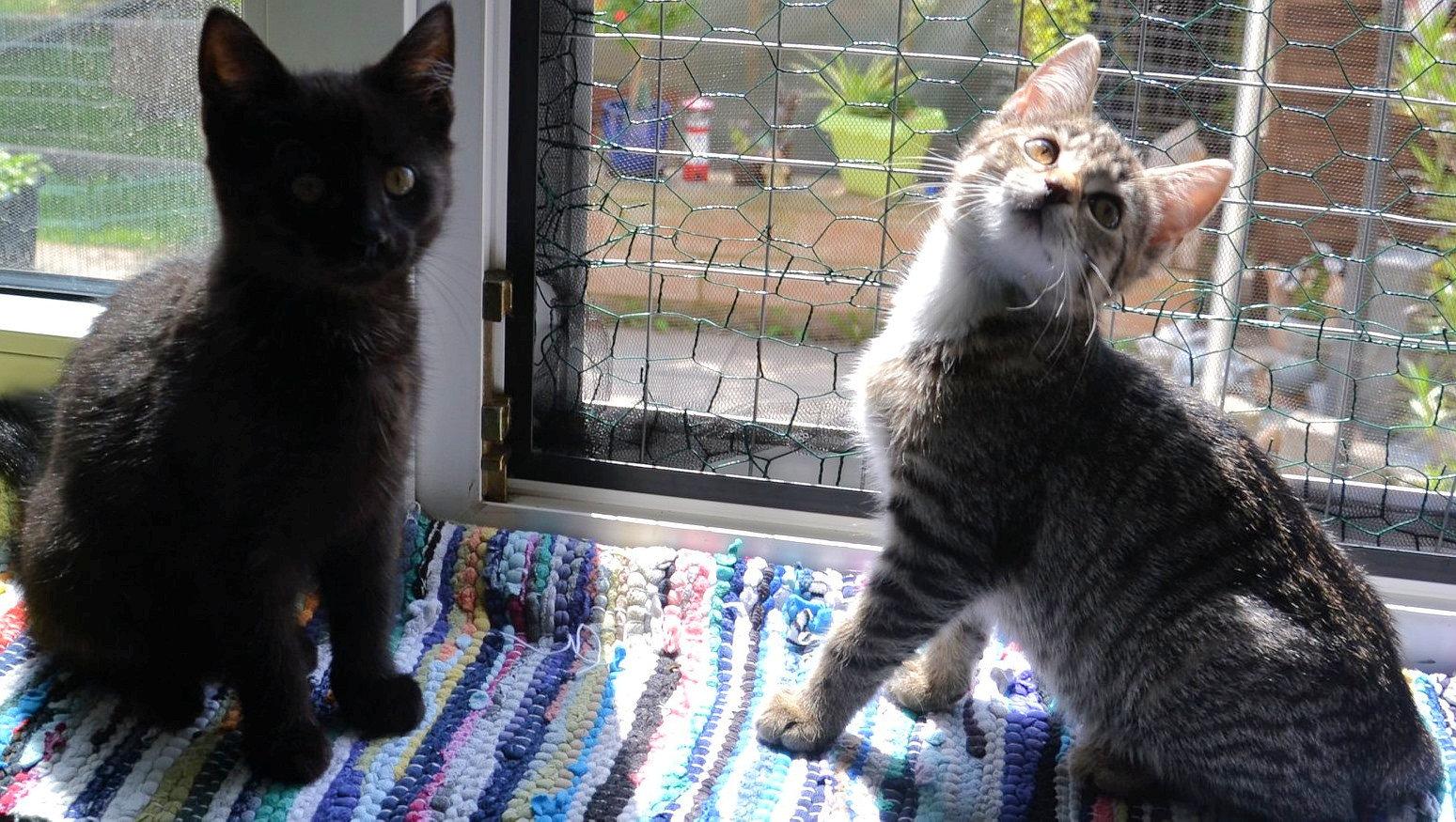 kleiner schwarzer Kater und getiegerte Katze auf einer Fensterbank
