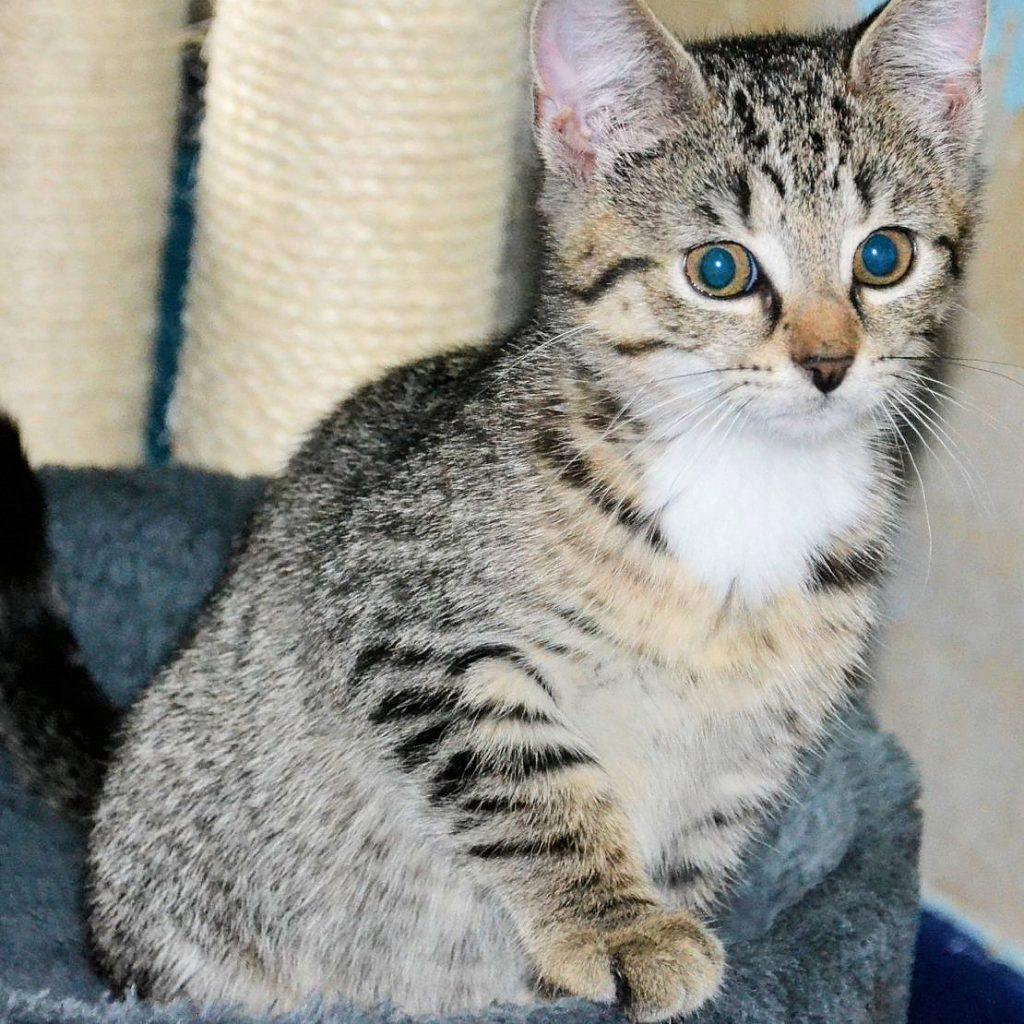 kleine getiegerte Katze auf einem Kratzbaum