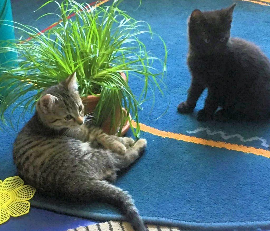 zwei kleine Katzen auf einer blauen Decke, vor einem Blumentopf