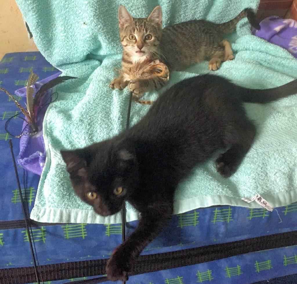 zwei kleine Katzen liegen auf einem Handtuch