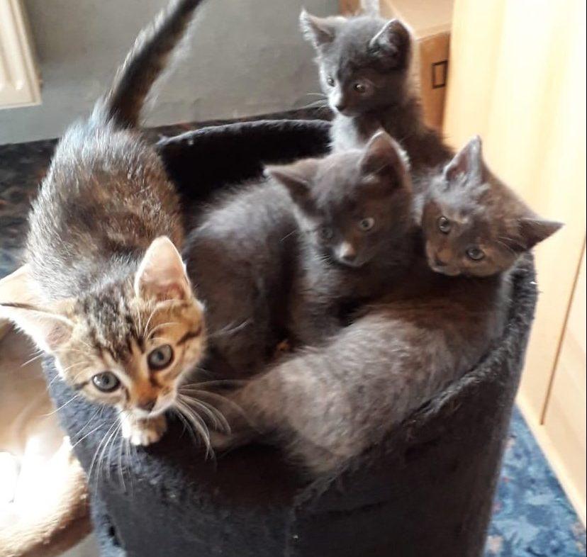 vier kleine Katzen in einem Katzennest
