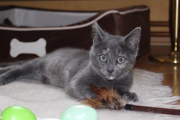 kleine schwarze Katze liegt auf einem weißen Teppich