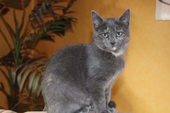 kleine schwarze Katze vor einer Zimmerpflanze
