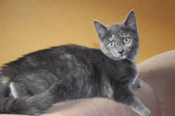 kleine schwarze Katze liegt auf einer Sofalehne