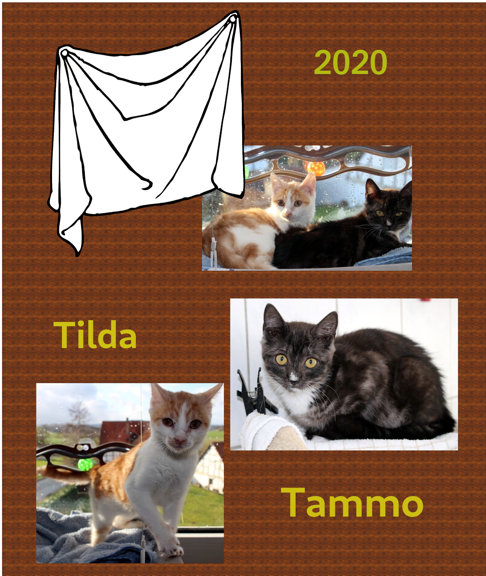 Zusammenstellung von drei Katzenbildern