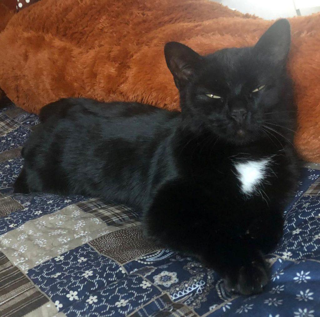schwarze Katze mit weißem Brustfleck, liegt mit fast geschlossenen Augen auf einer blau-gemusterten Decke