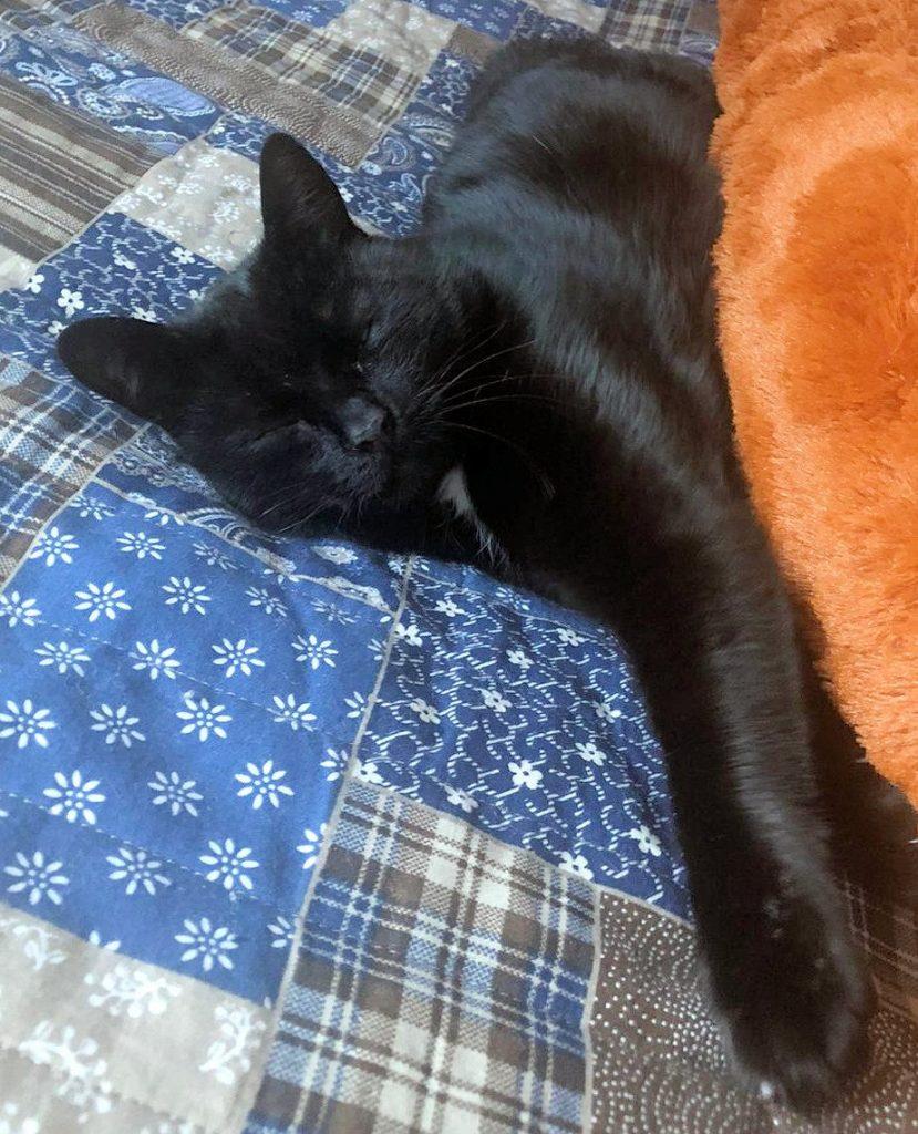 schwarze Katze liegt mit geschlossenen Augen auf einer blau-gemusterten Decke
