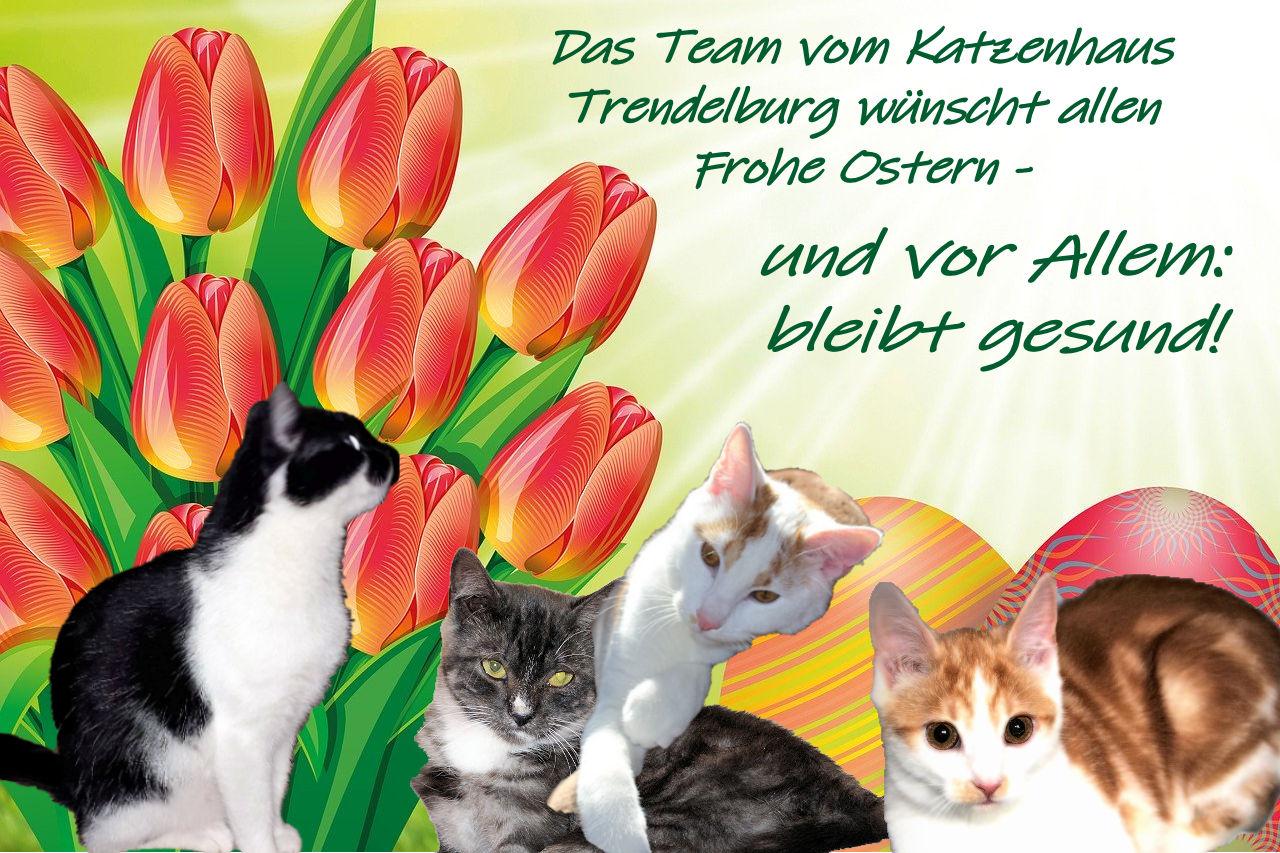 vier Katzen vor einem Hintergrund mit Tulpen und Ostereiern und grüner Schrift