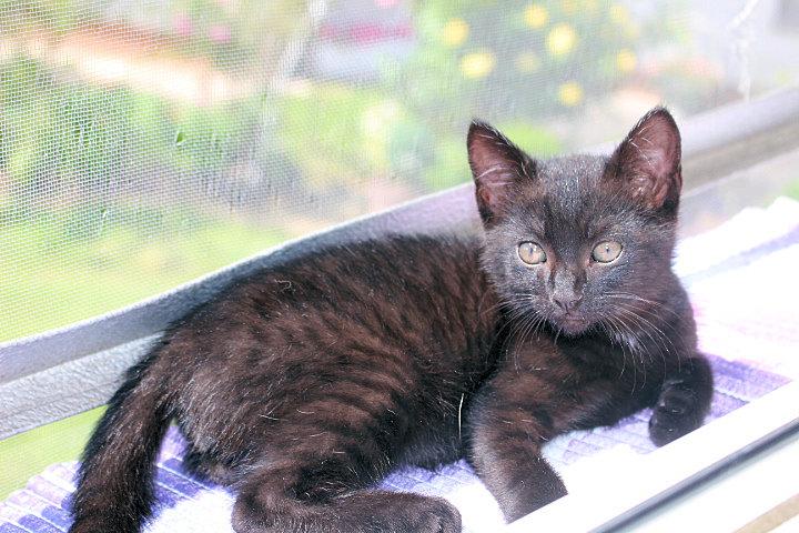 kleiner schwarzer Kater liegt in der Sonne auf einer Fensterbank