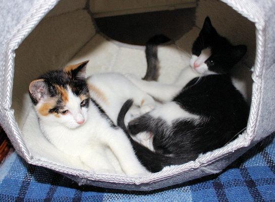 zwei kleine Katzen liegen in einer Katzenhöhle