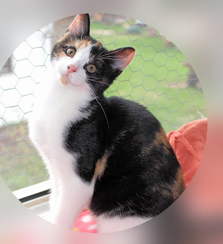 dreifarbige Katze auf einer Fensterbank