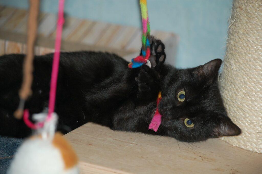 eine kleine schwarze Katze liegt auf der Seite und hangelt mit der Pfote nach einem Spielzeug