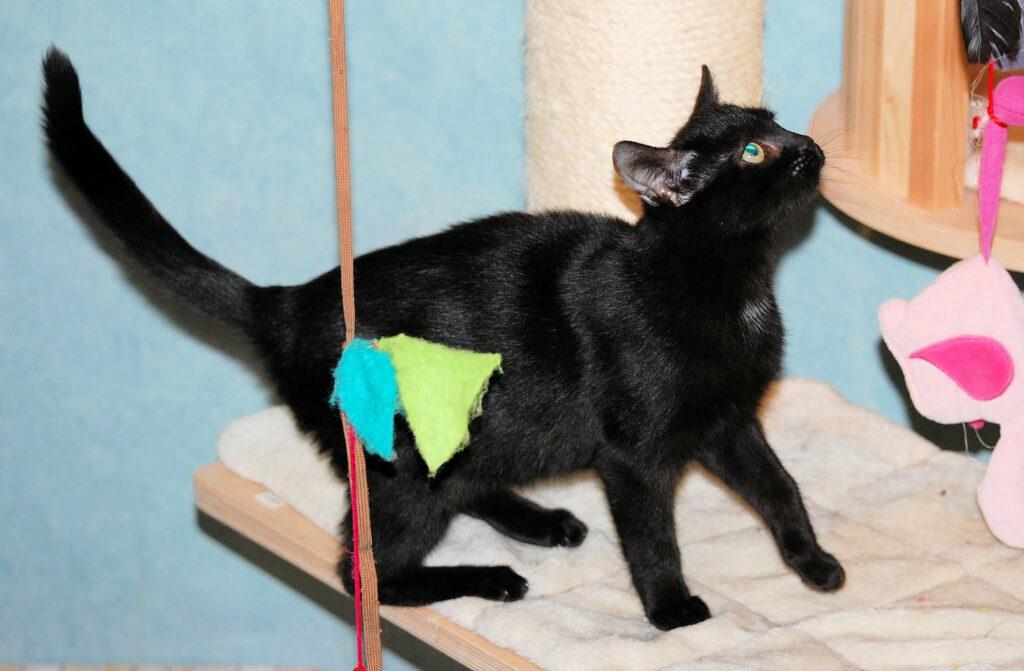 eine kleine schwarze Katze auf einem Kratzbaum