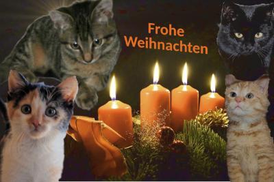 vier Katzen um ein Adventsgesteck mit vier Kerzen gruppiert