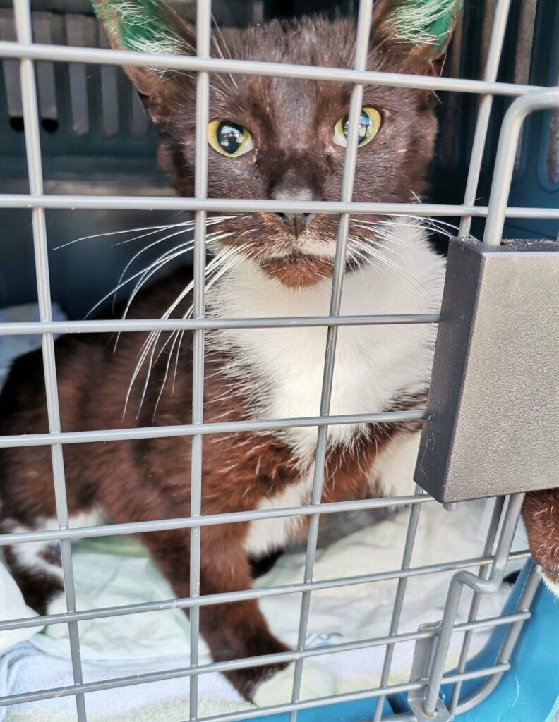 eine braun-weiße Katze schaut durch die Gittertür einer Transportbox