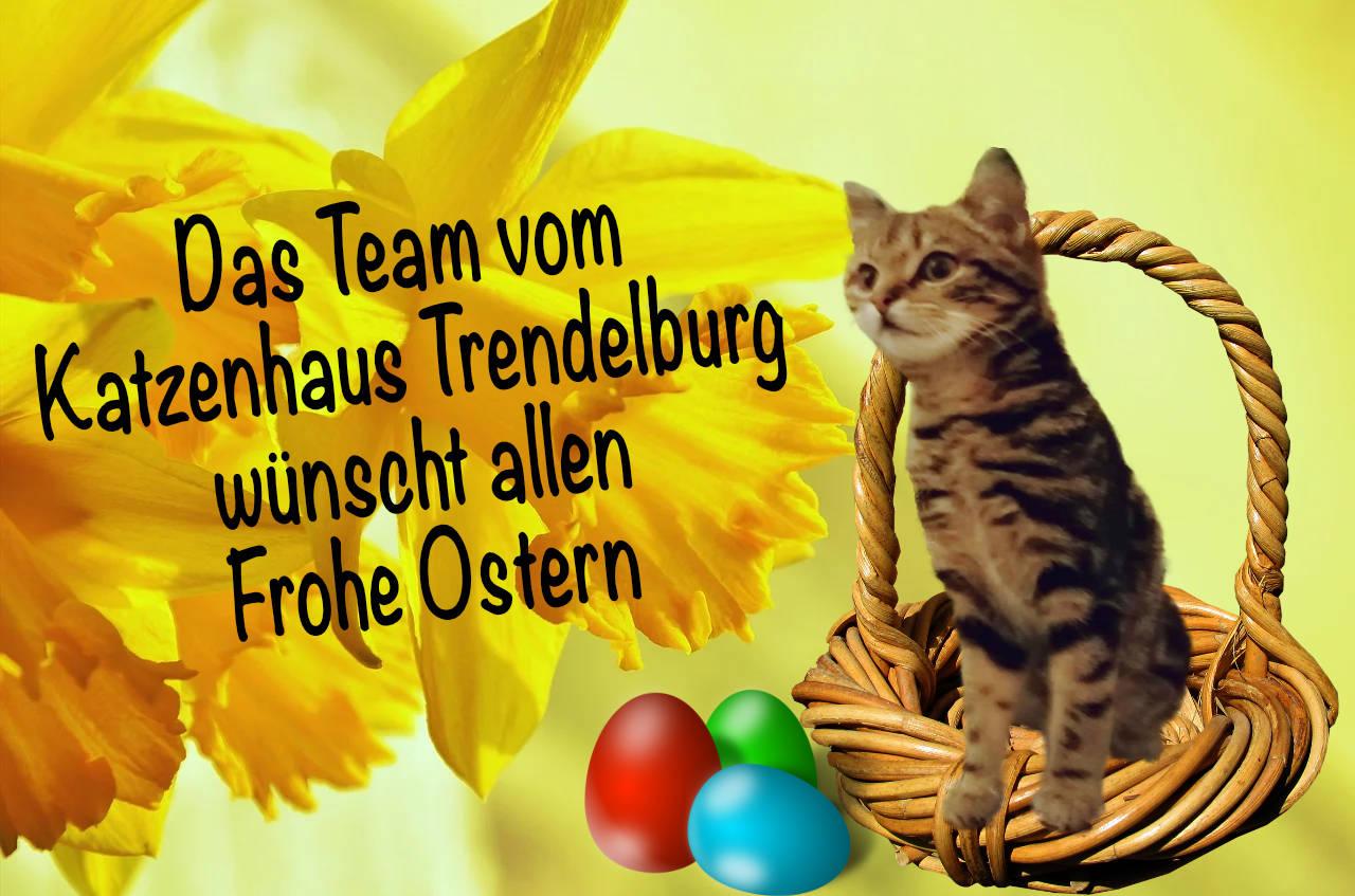 """Hintergrund mit gelben Narzissen, darauf ein Korb, in dem eine getigerte Katze sitzt, davor drei bunte Ostereier und der Schriftzug """"Das Team vom Katzenhaus Trendelburg wünscht allen Frohe Ostern"""""""