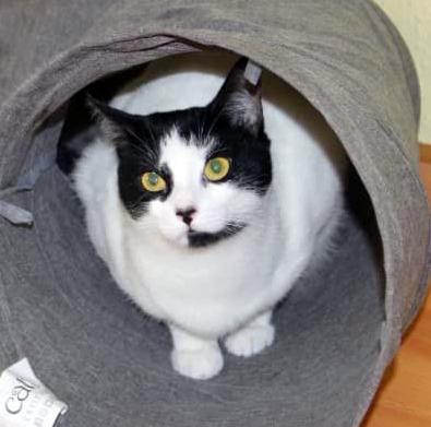 eine weiß-schwarze Katze sitzt in einem Spieltunnel, schaut in die Kamera