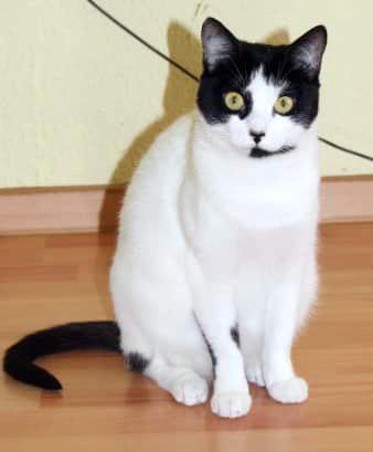 eine weiß-schwarze Katze sitzt auf dem Fußboden