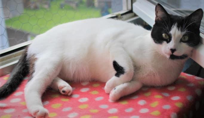 eine weiß-schwarze Katze liegt auf einem roten Kissen auf der Fensterbank