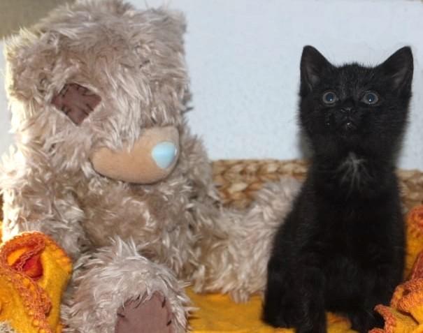 eine kleine schwarze Katze sitzt neben einem großen braunen Stoffbären in einem Korb