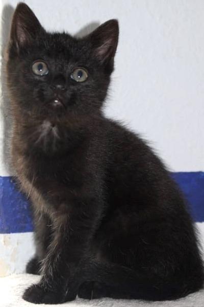 kleine schwarze Katze sitzt vor einer weißen Wand mit blauem Streifen