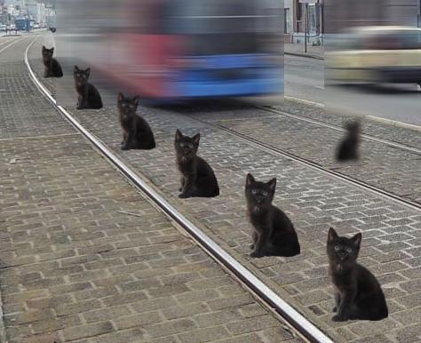 collage: sieben schwarze Katzen sitzen im Gleisbett der Straßenbahn