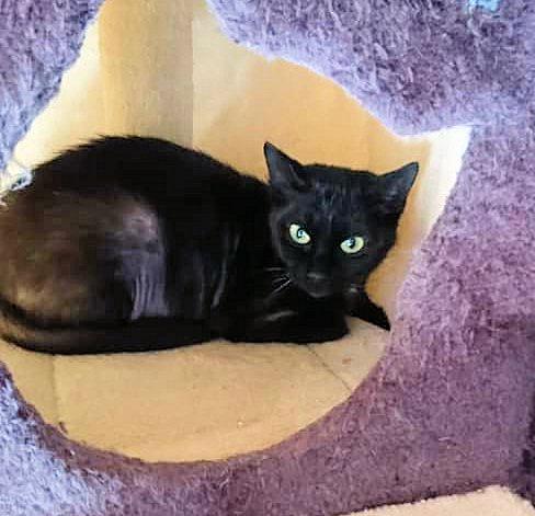 Eine schwarze Katze liegt auf einem Kissen, schaut in die Kamera