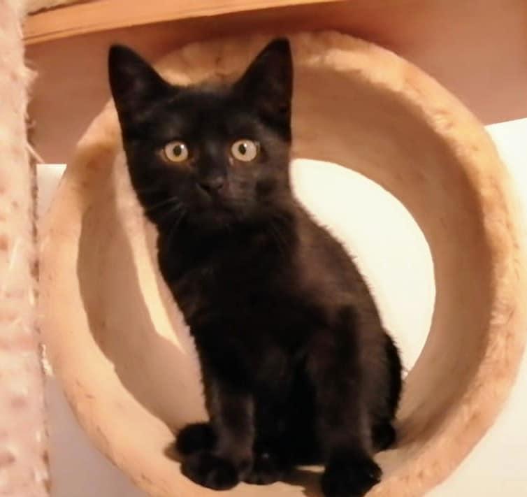 eine schwarze Katze sitzt auf einem Kratzbaum und schaut in die Kamera