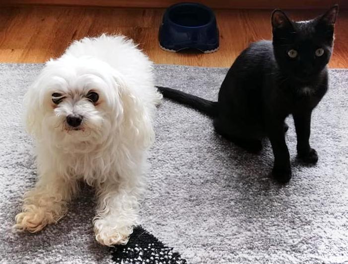 kleiner schwarzer Kater sitzt auf einem Teppich neben einem weißen, liegenden Hund