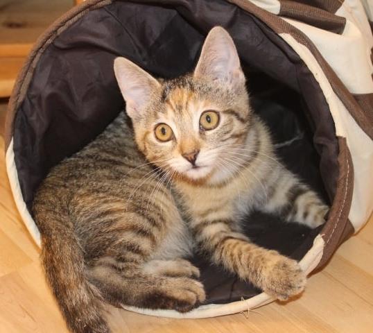 kleine getigerte Katze in einem Spieltunnel